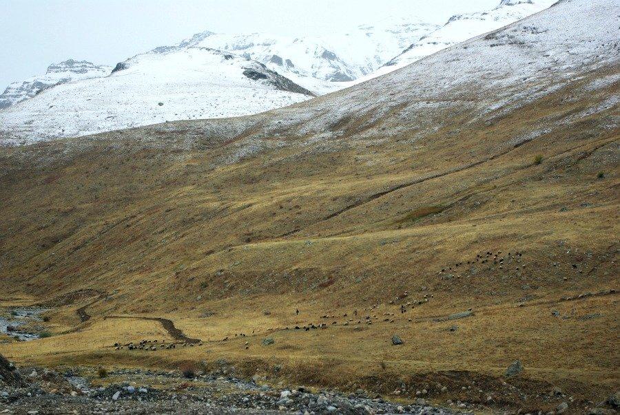 Sheep in the Kackars Eastern Turkey Road Trip