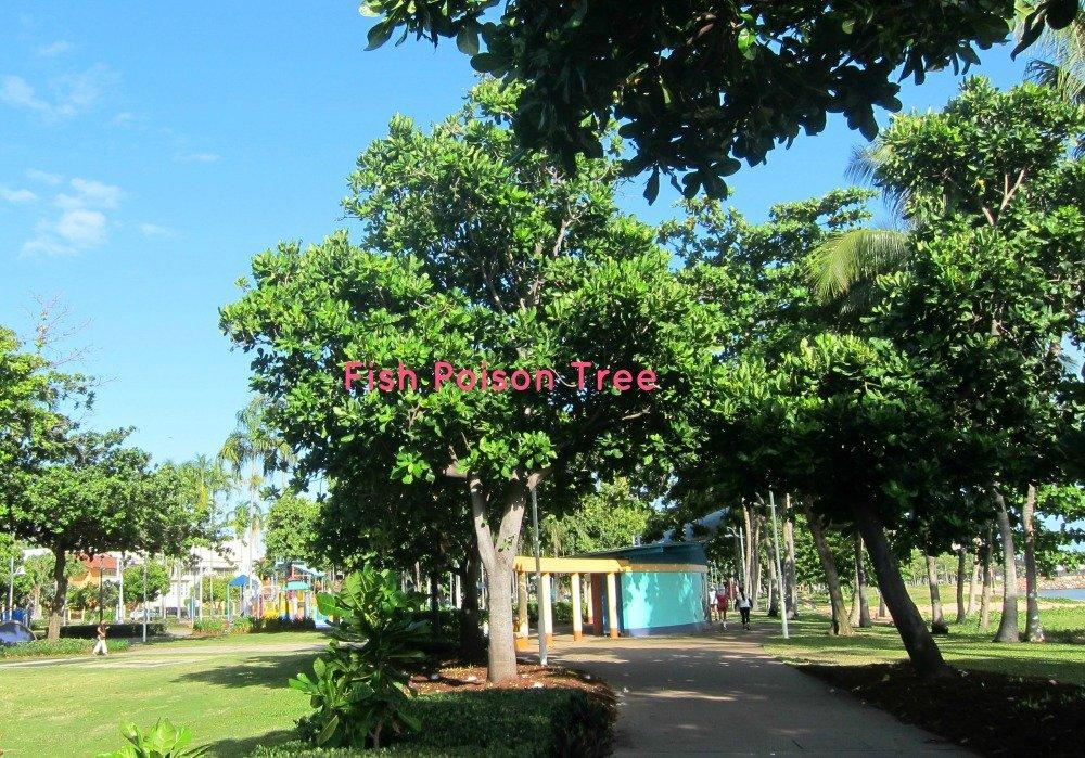 Fish Poison Treet The Strand Townsville