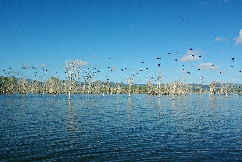 Peter Faust Dam Cormorants