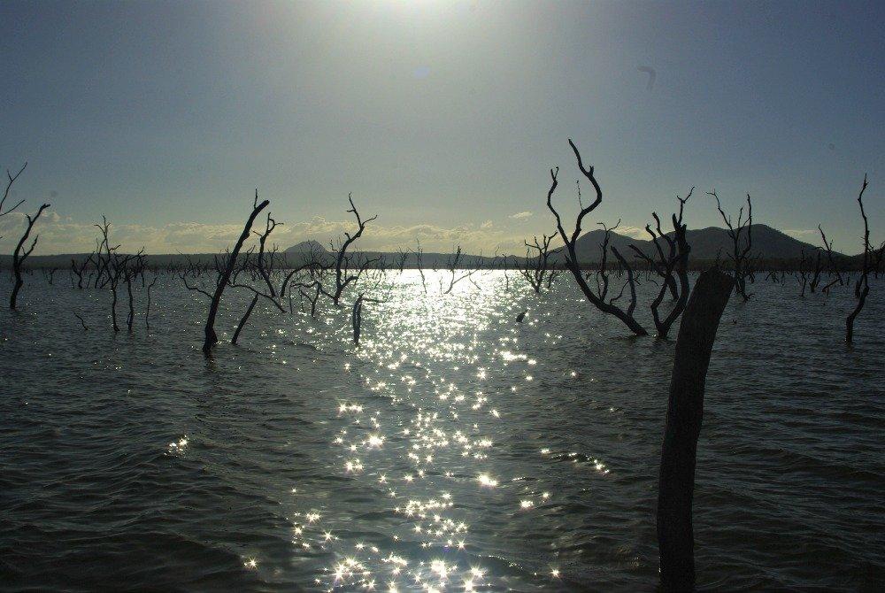 Peter Faust Dam Sun Sparkling