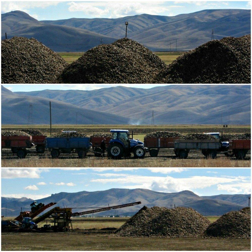 Dogubayazit Bound Harvest Collage