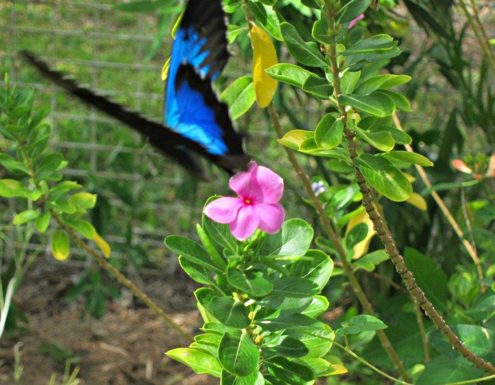 Townsville Butterfly 1000