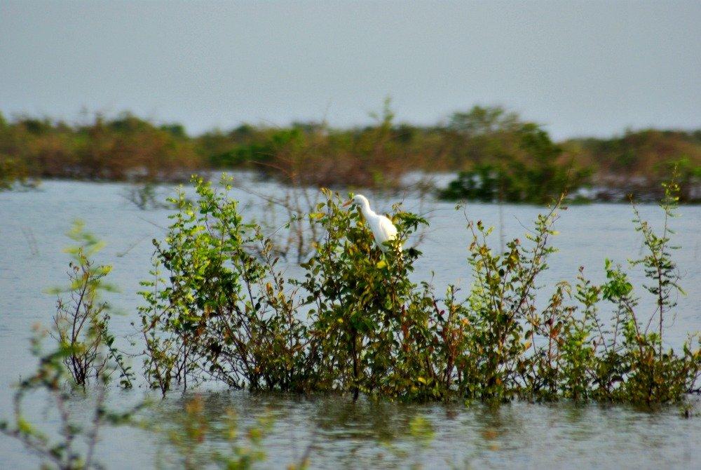 Kampong Pluk Bird