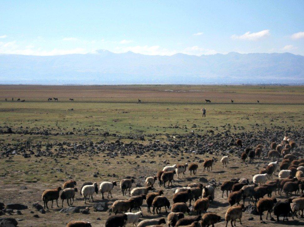Ararat plainsTurkey