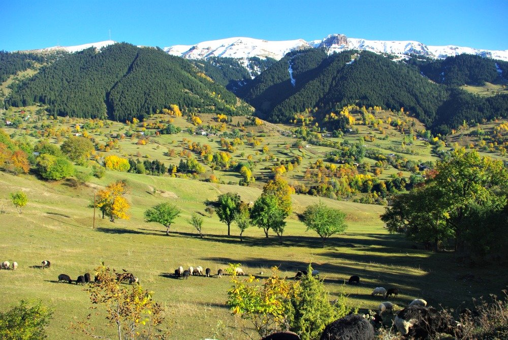 The surprising Savsat Valley is like a slice of Switzerland in North Eastern Turkey.