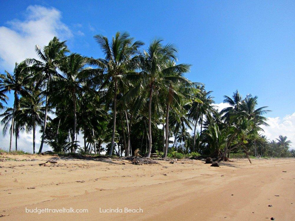 Lucinda Beach Palm Trees