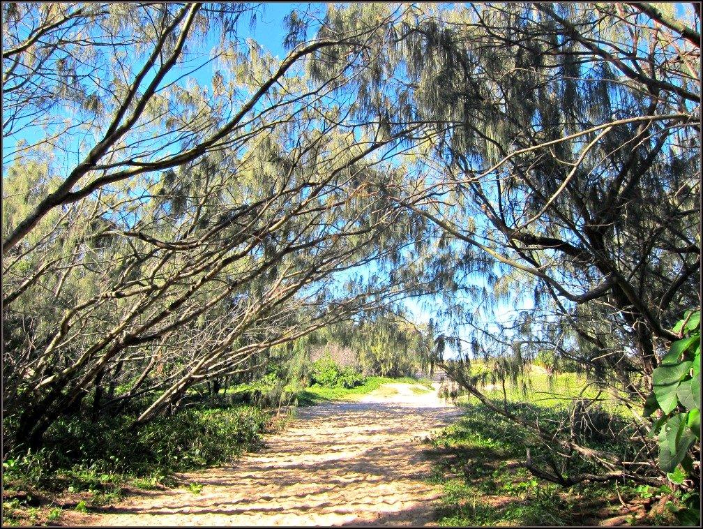 Mudjimba She Oak Entrance
