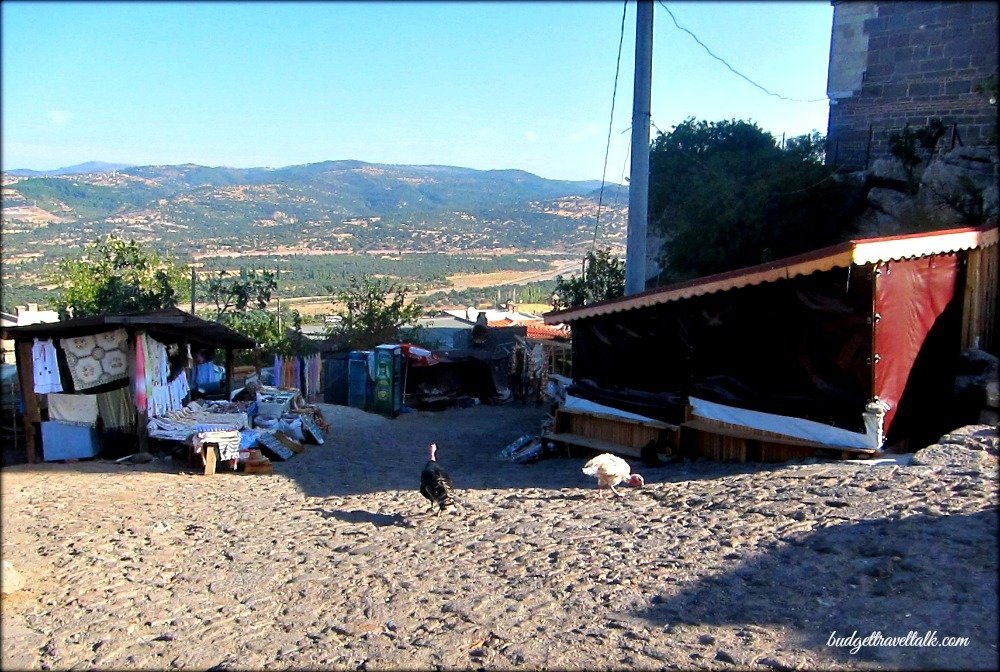 Turkeys in Assos Turkey