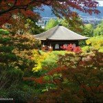 Kyotos Best Temple for Autumn Colours is…