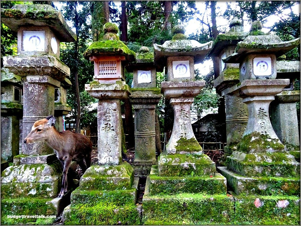 Nara Deer and Lanterns
