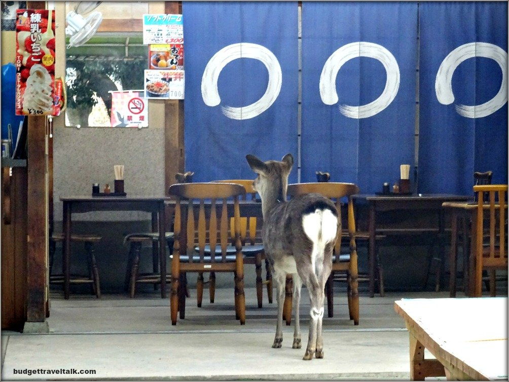 Nara Deer in Cafe
