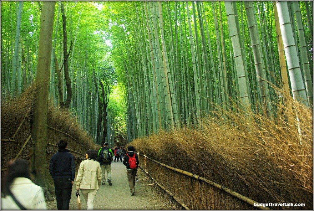 People walking through the Arashiyama Bamboo Forest path with towering bamboo close on both sides of the path