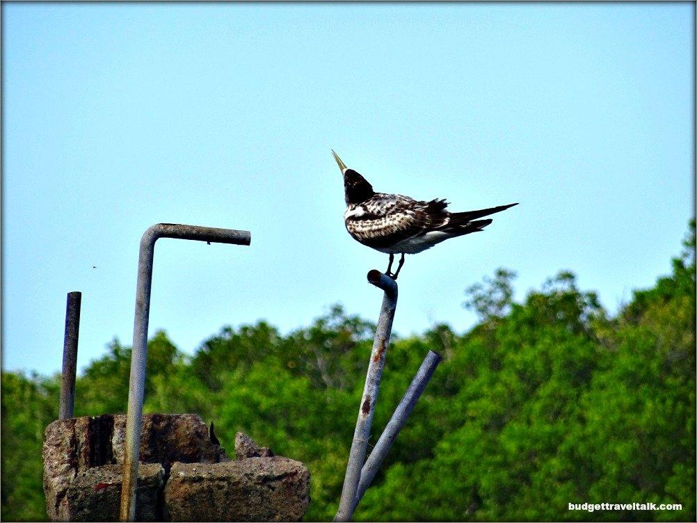 Seabird at Dungeness N.Q.