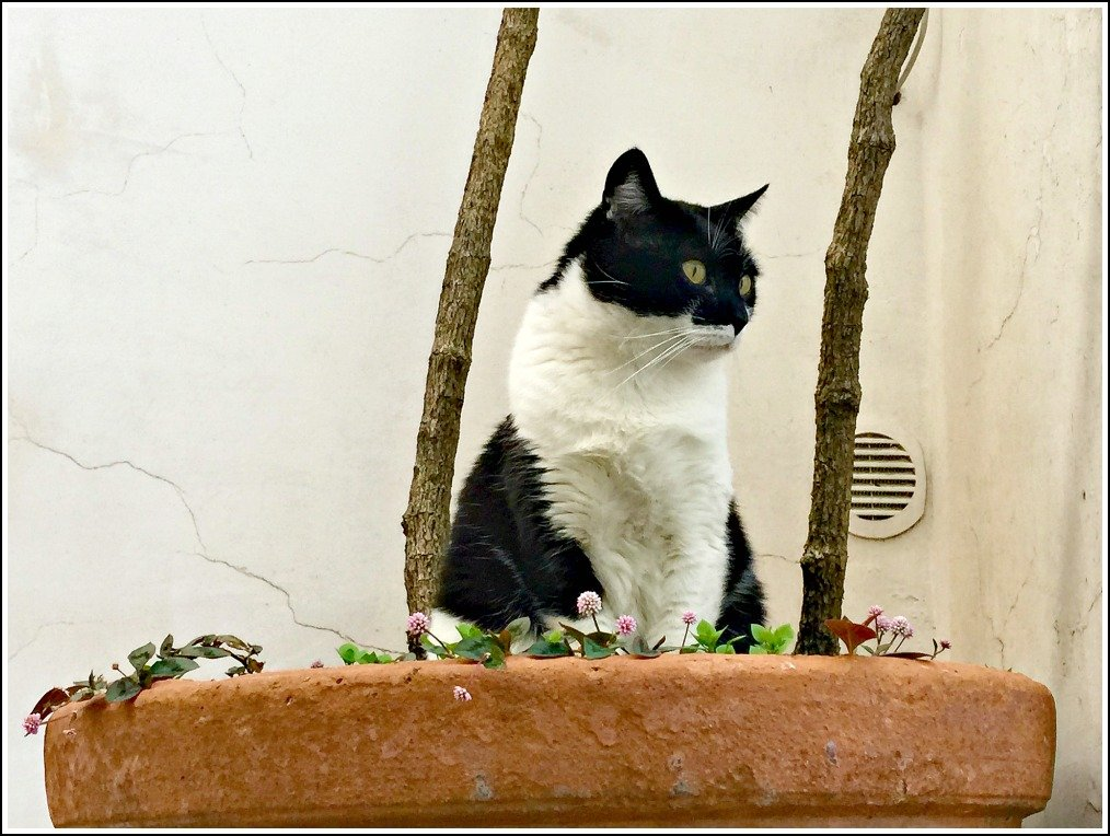 Positano Alleycat