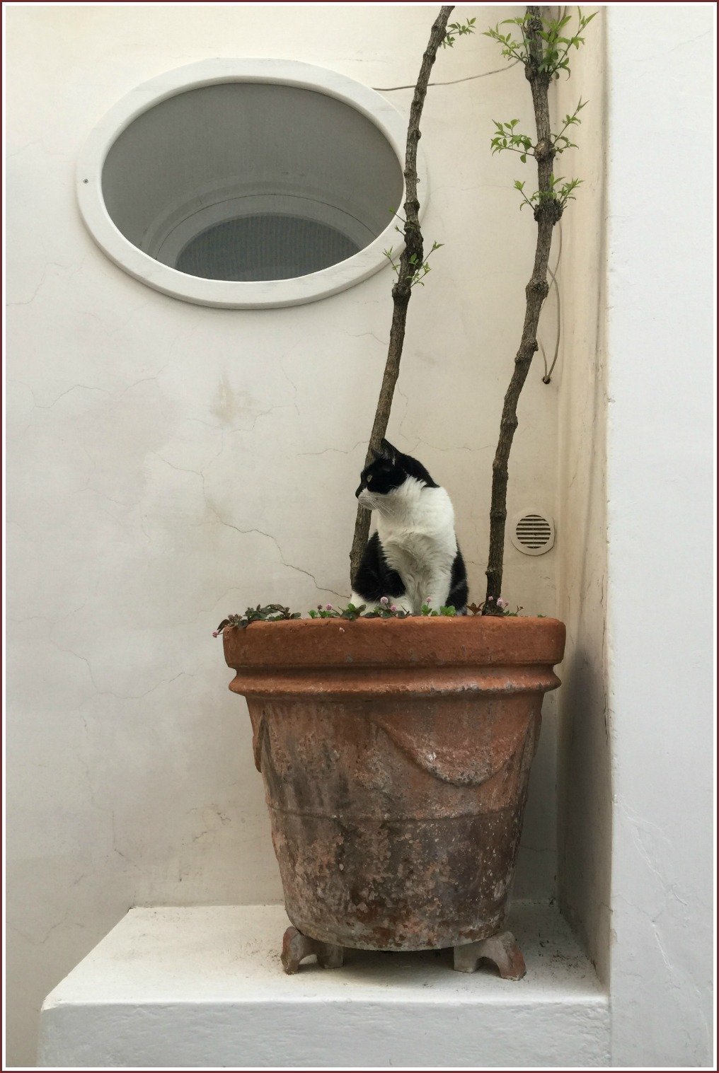 Positano Pot Plant Cat