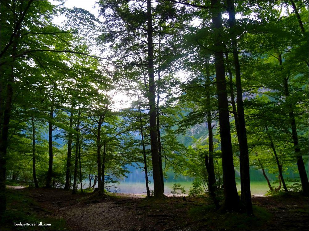 Lake Bohinj through the trees