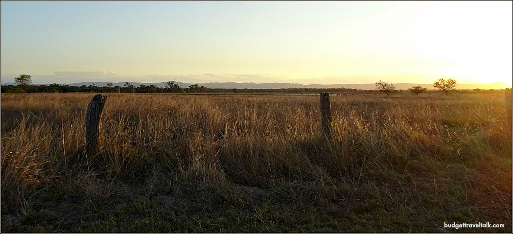 St. Lawrence Grass in Sunset