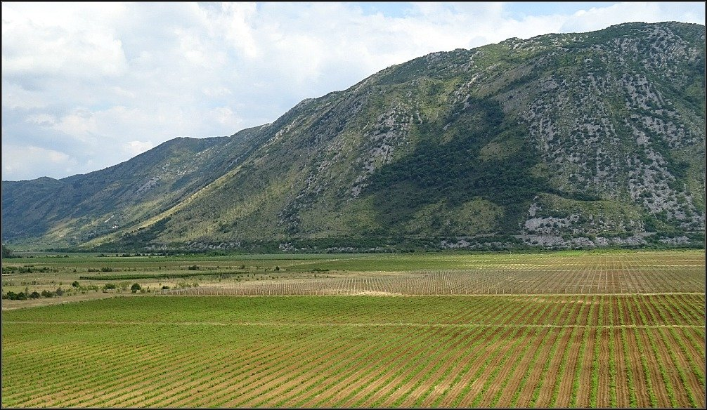 Crops north of Trebinje