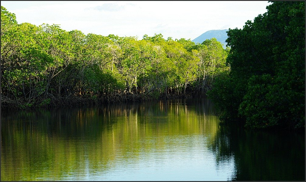 Dicksons Inlet Mangroves