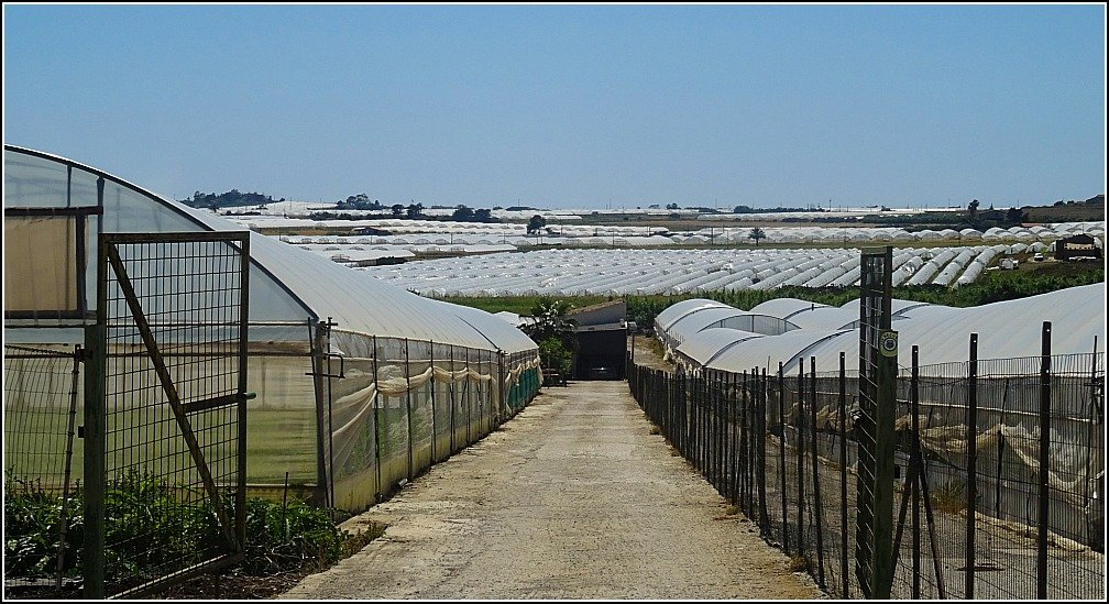Pachino Greenhouses Sicily