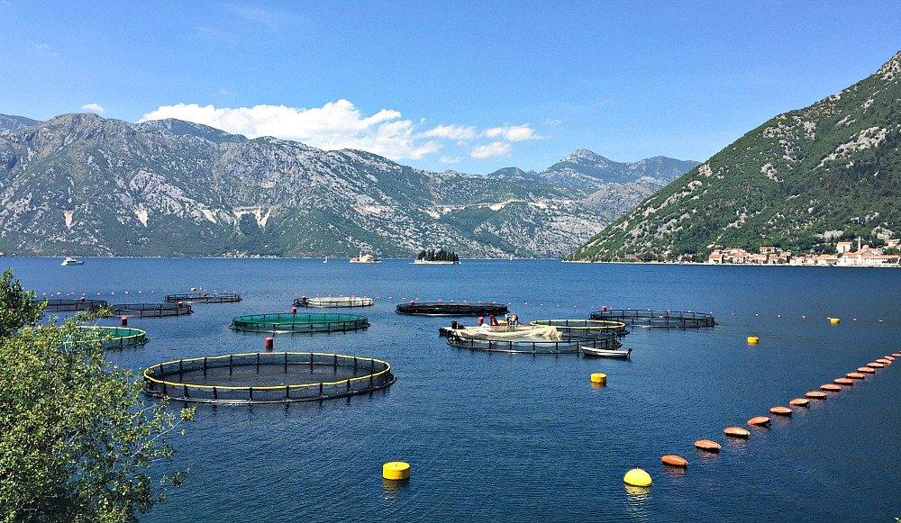 Montenegro Bay of Kotor Fish Farms