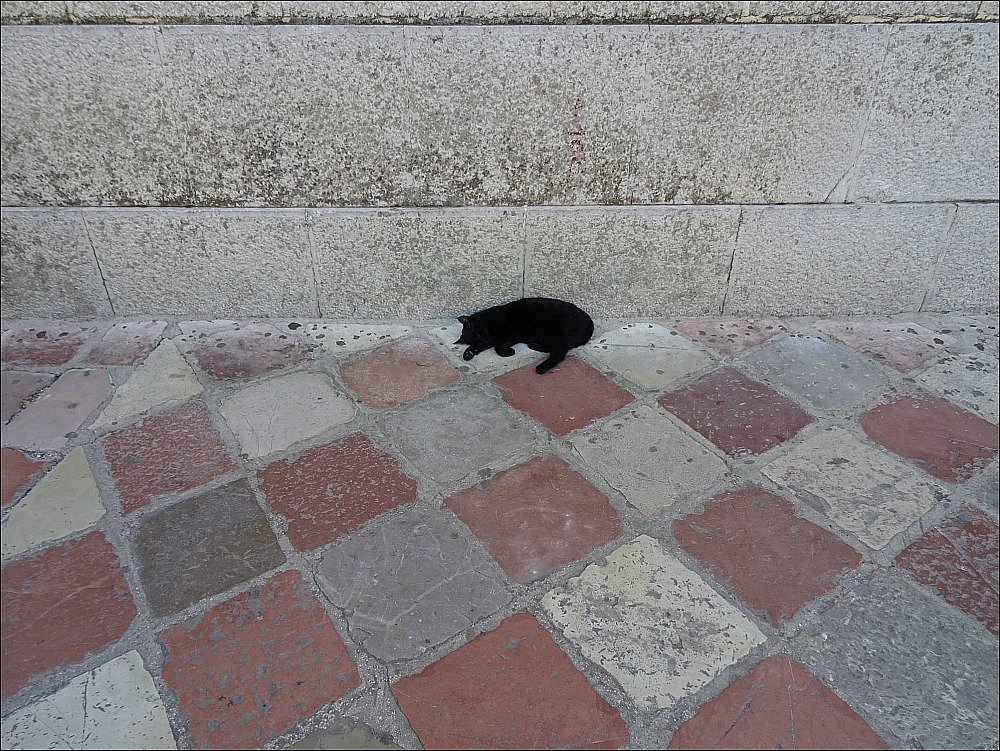 Kotor Cat on Pavers