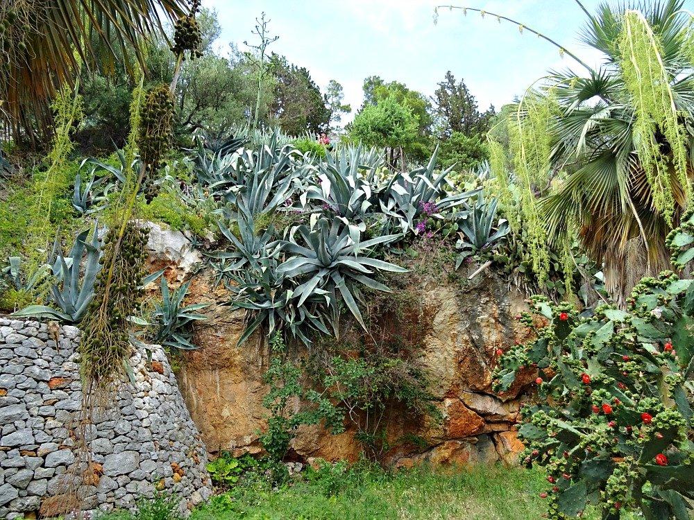 Hvar Town Agave Plants