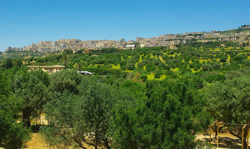 Agrigento and Olive Trees from the Temples