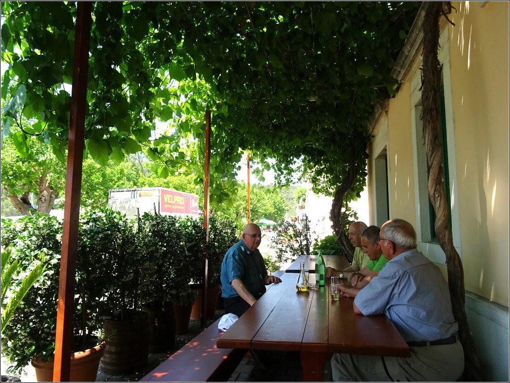 Kanobo Mates Grapevine covered courtyard, Skradin, Croatia