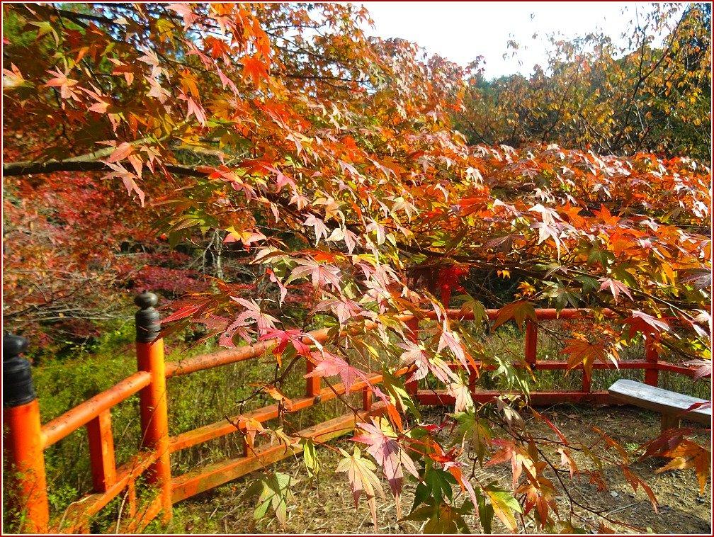 Ishiyama-dera Maple Autumn Colour