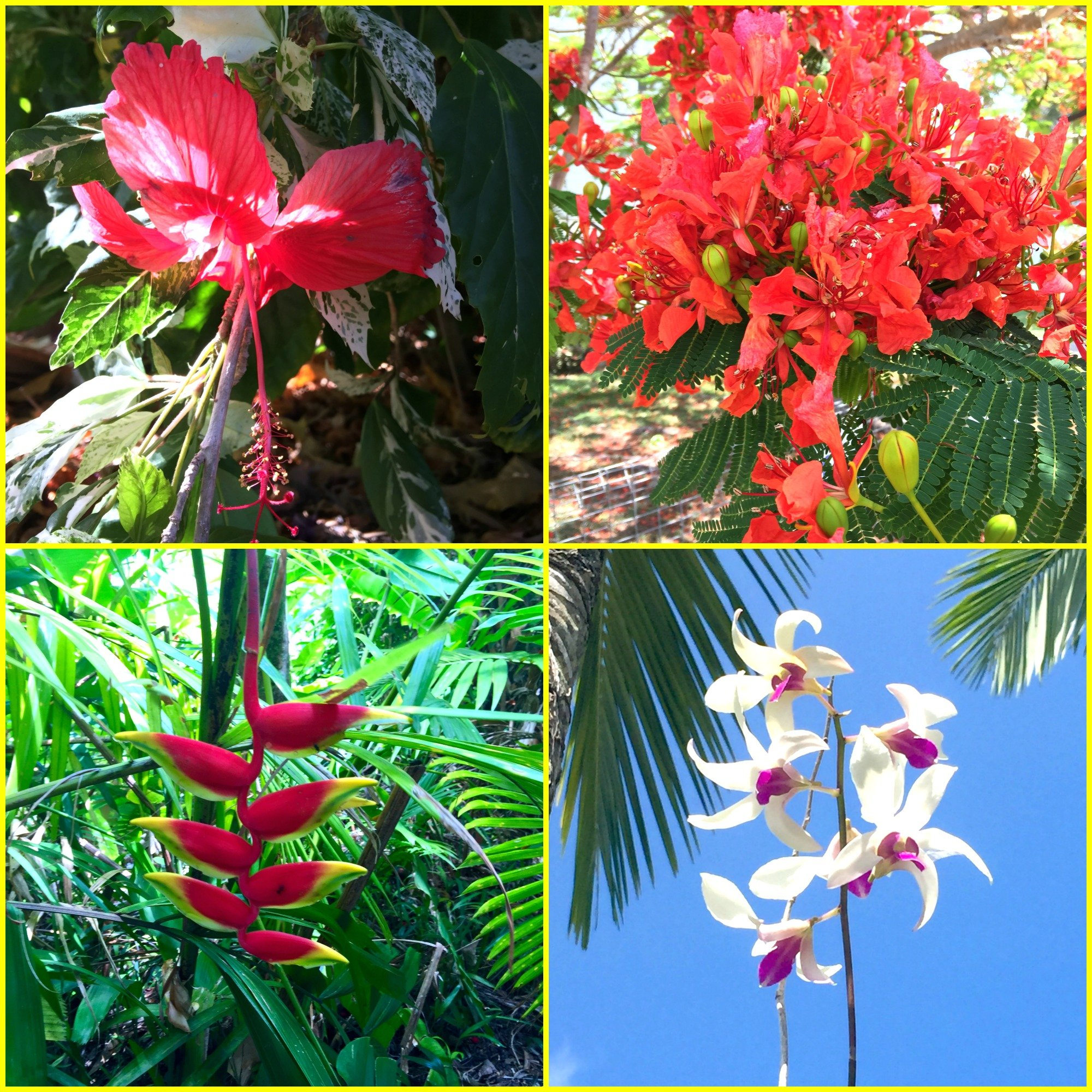 Christmas Downunder Tropical Plants