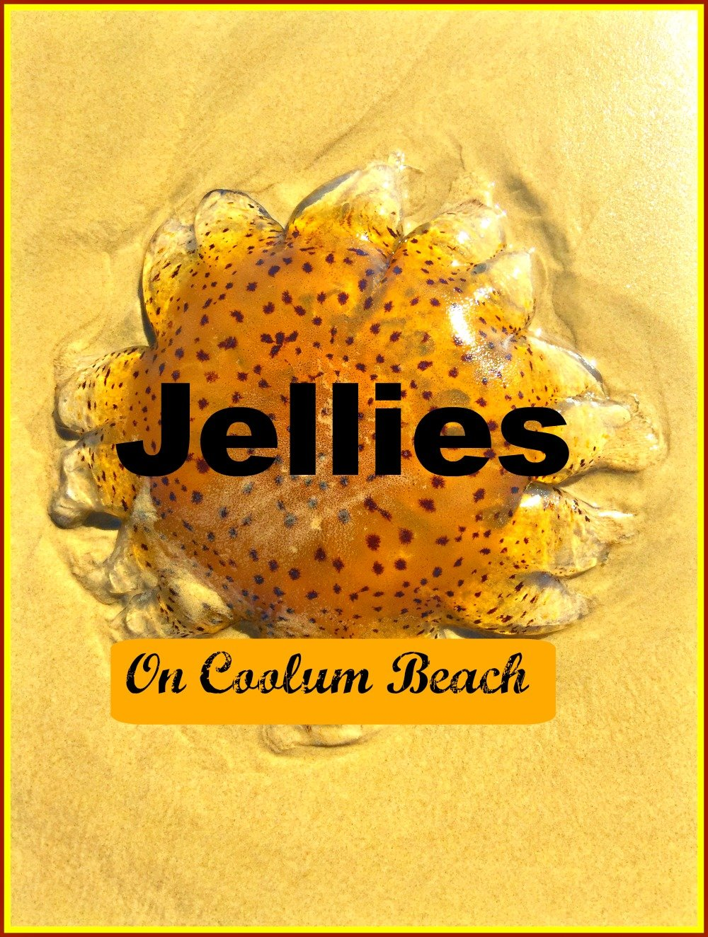 Jellies at Coolum Beach