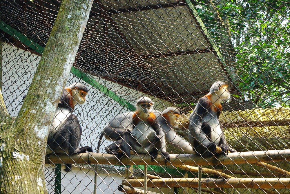 Endangered Primate Centre Cuc Phuong National Park