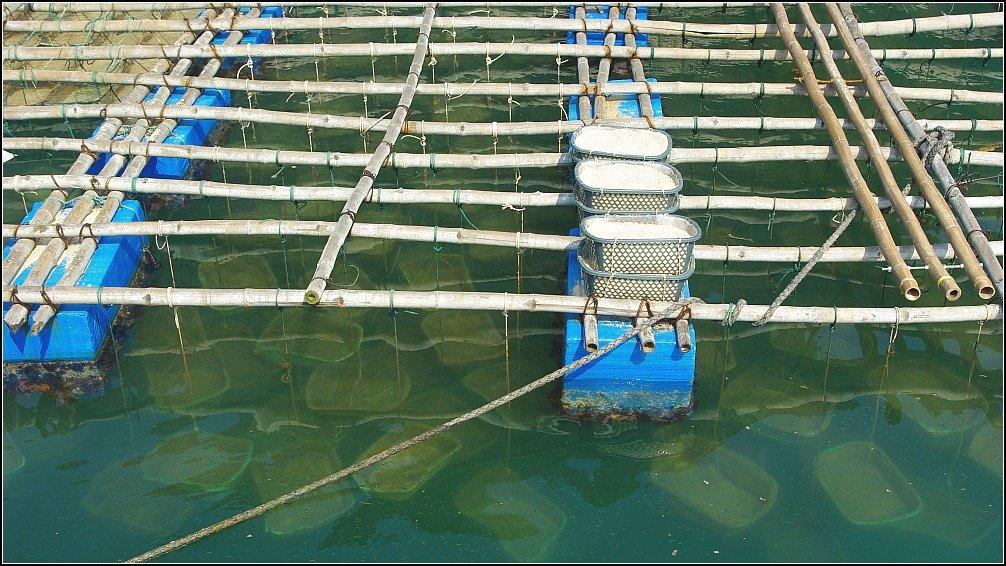 Lan Ha Bay Mussels Vietnam