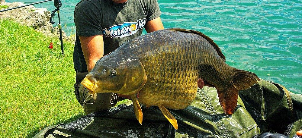 Lake Bled Slovenia 23 kg Carp