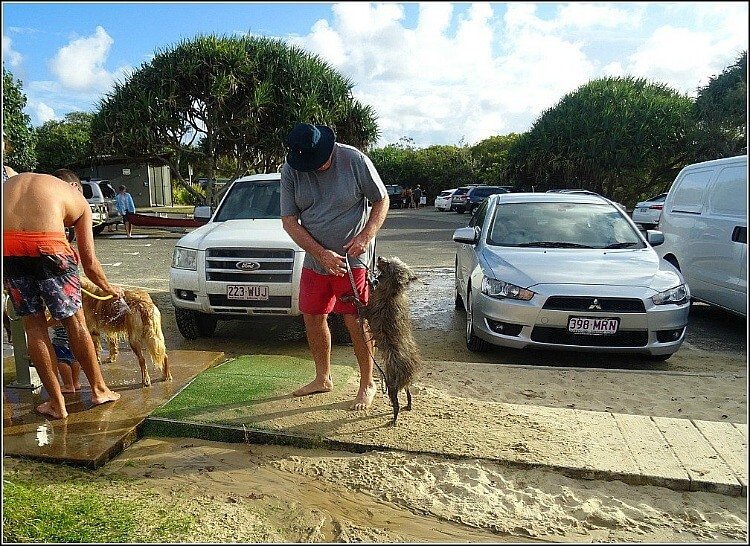 Dogs and humans at Stumers Creek Dog Wash Station
