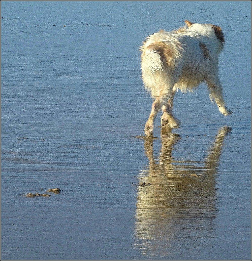 Stumers Creek Doggy Friend