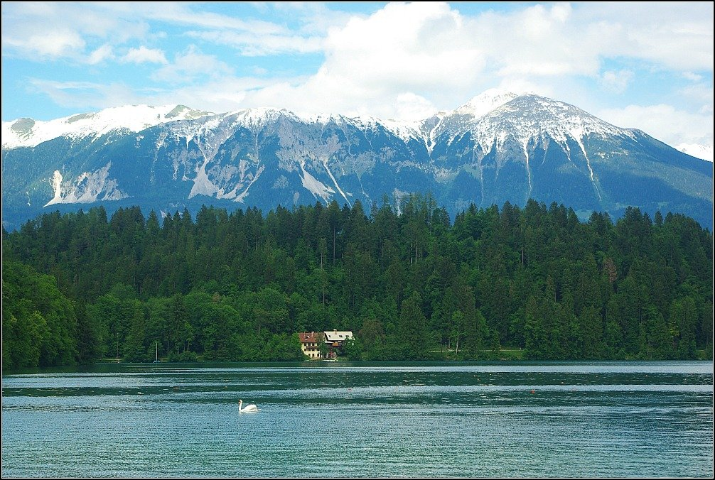 Lake Bled Swan and the Julian Alps