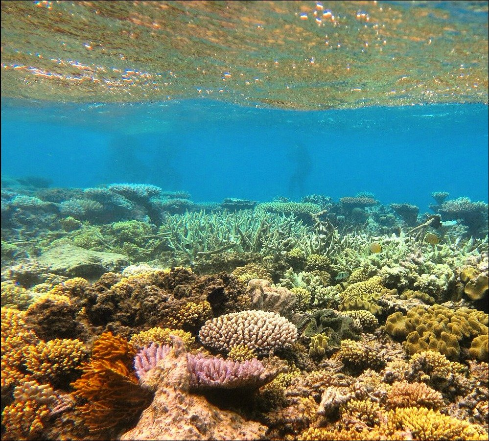Coral Great Barrier Reef by Adventure Mumma