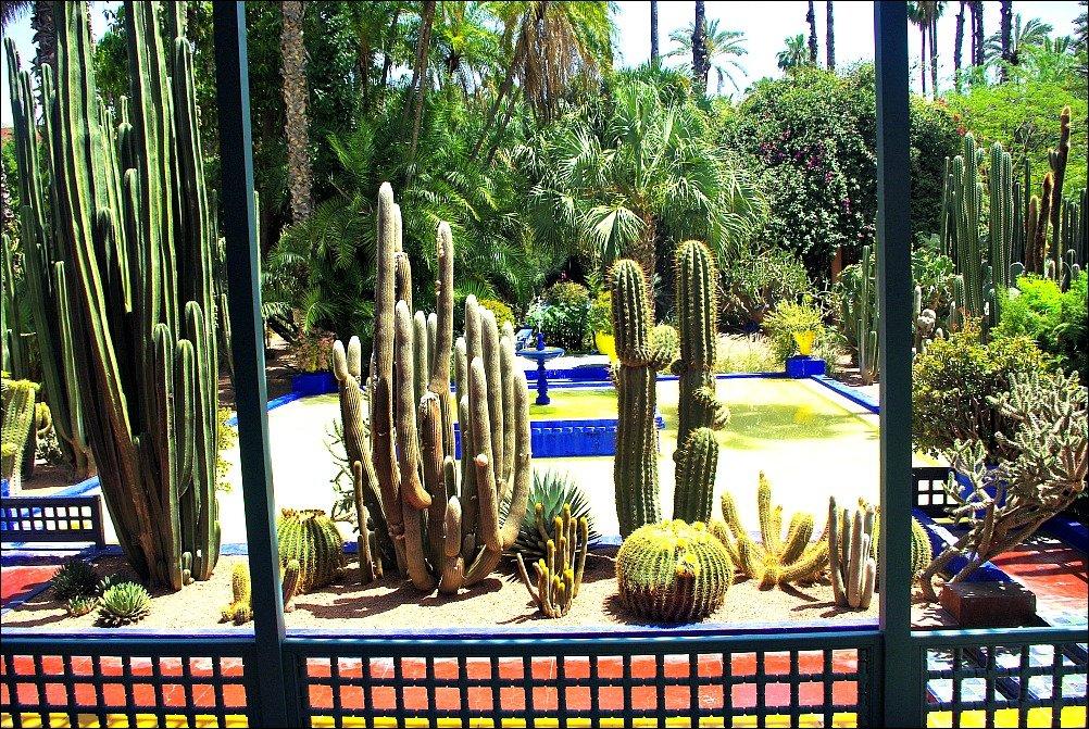 Marrakech Majorelle Garden Cactus
