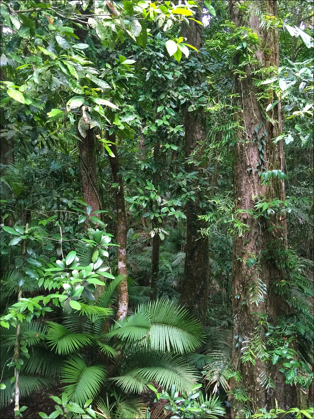 Mossman Gorge Rainforest
