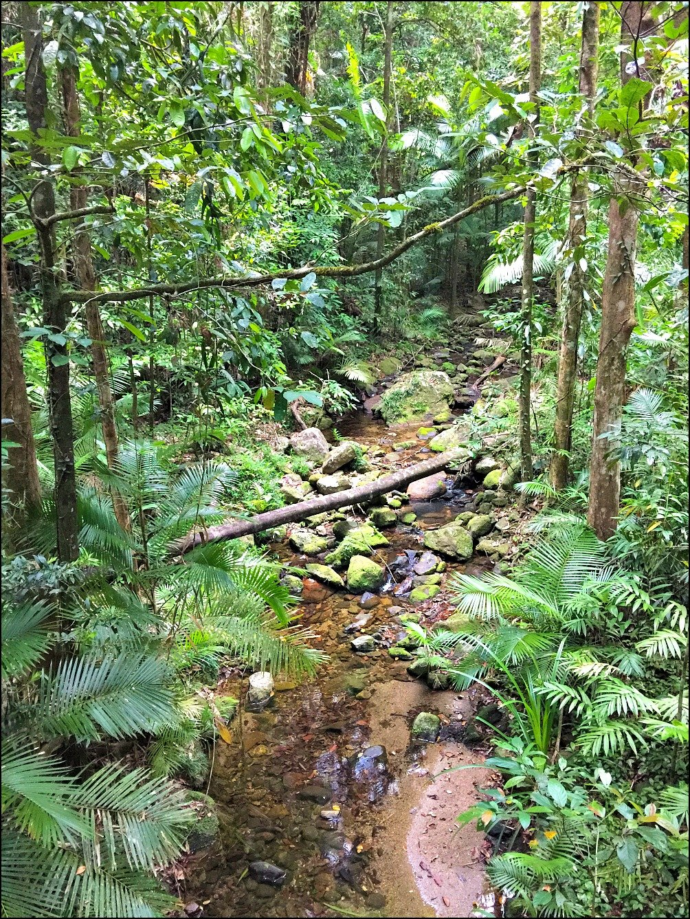 Mossman Gorge Rex Creek