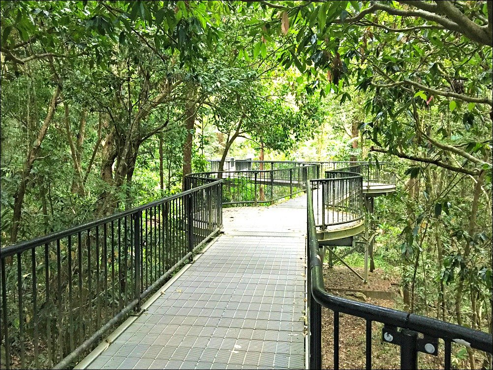 Mossman Gorge Elevated Boardwalk