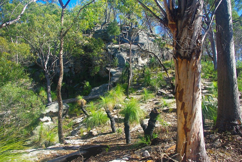 Cania Gorge Grass Trees and Tree Trunks