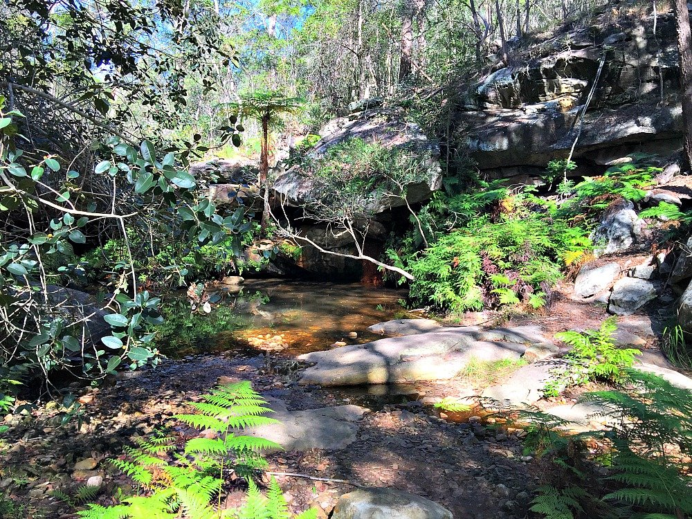 Cania Gorge Tree Fern Pool
