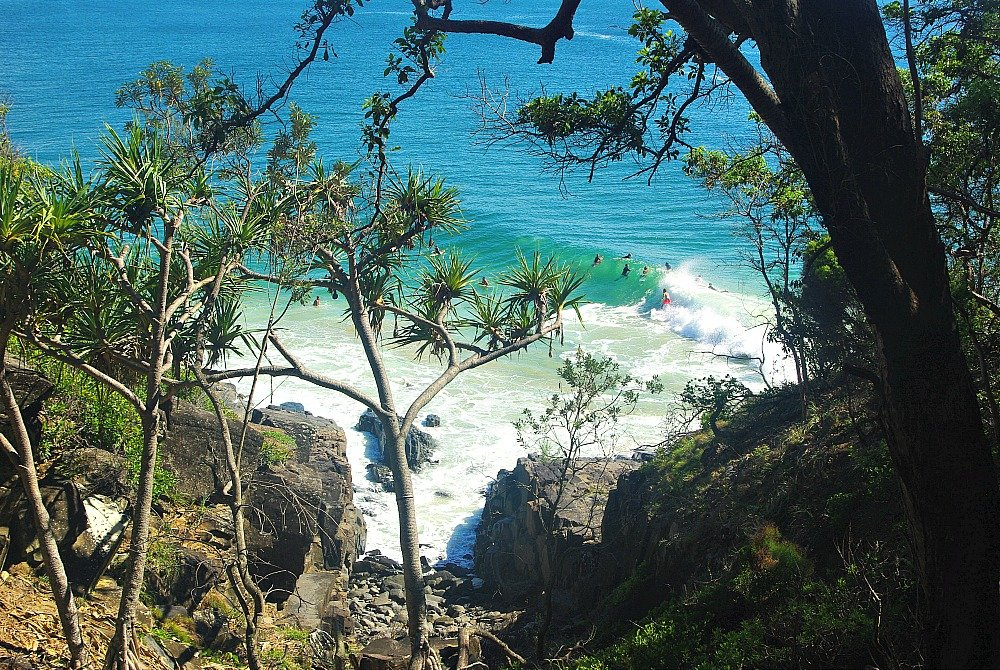 Looking through the Trees Noosa National Park