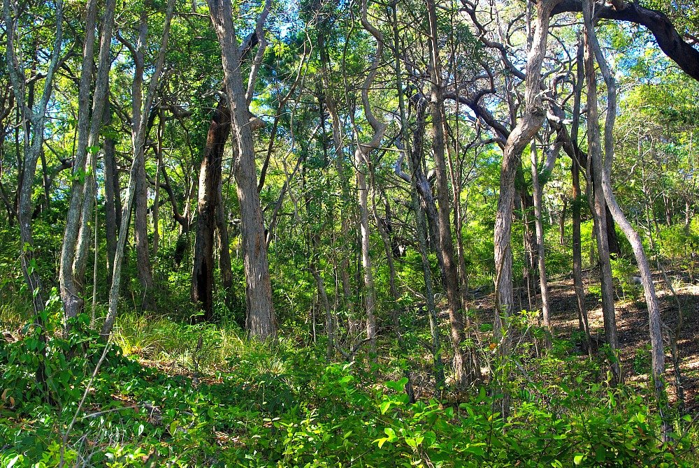 Trees in Noosa National Park