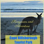 Kangaroos and Adventure at Cape Hillsborough Tourist Park