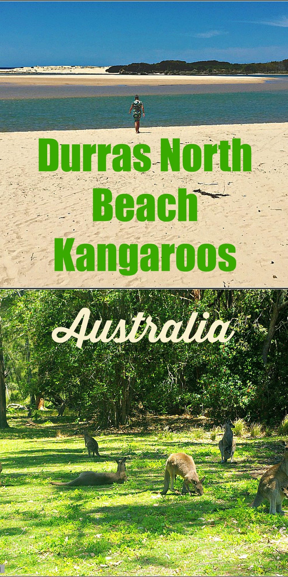 Durras North Beach is a great place to picnic and kangaroo watch