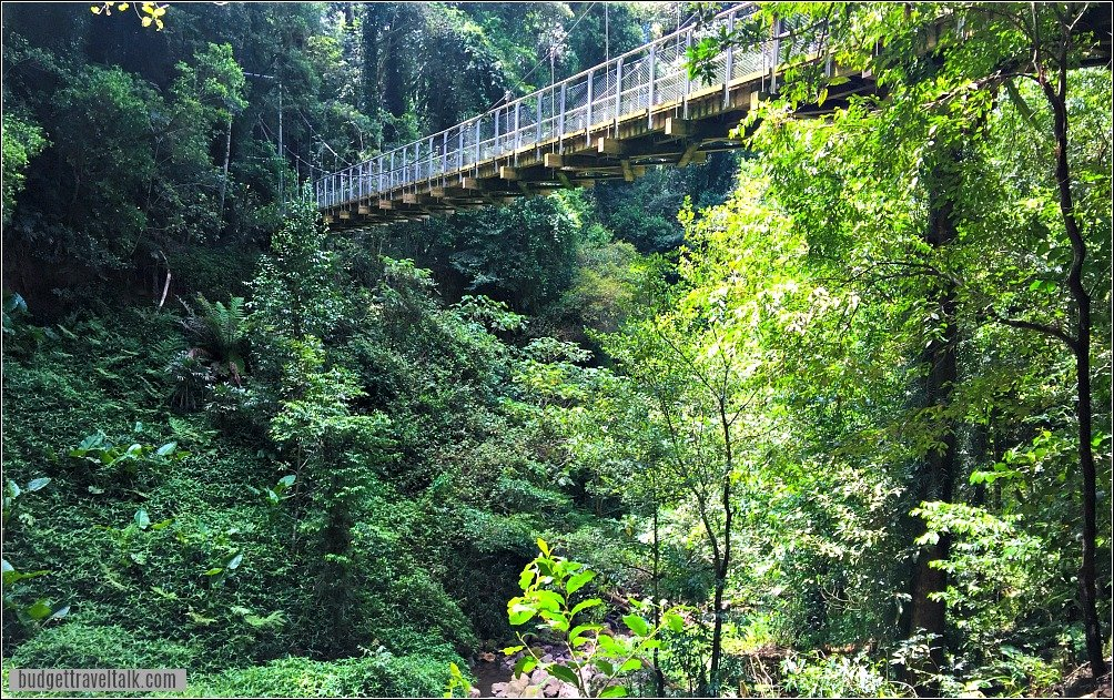 Rainforest Bridge at Crystal Shower Falls Dorrigo National Park New South Wales